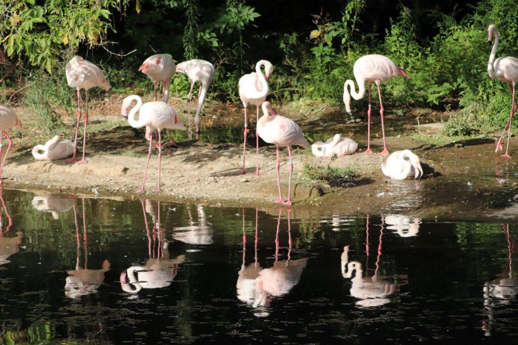 Le parc zoologique a été créé un an après l'inauguration du parc de la Tête d'Or.