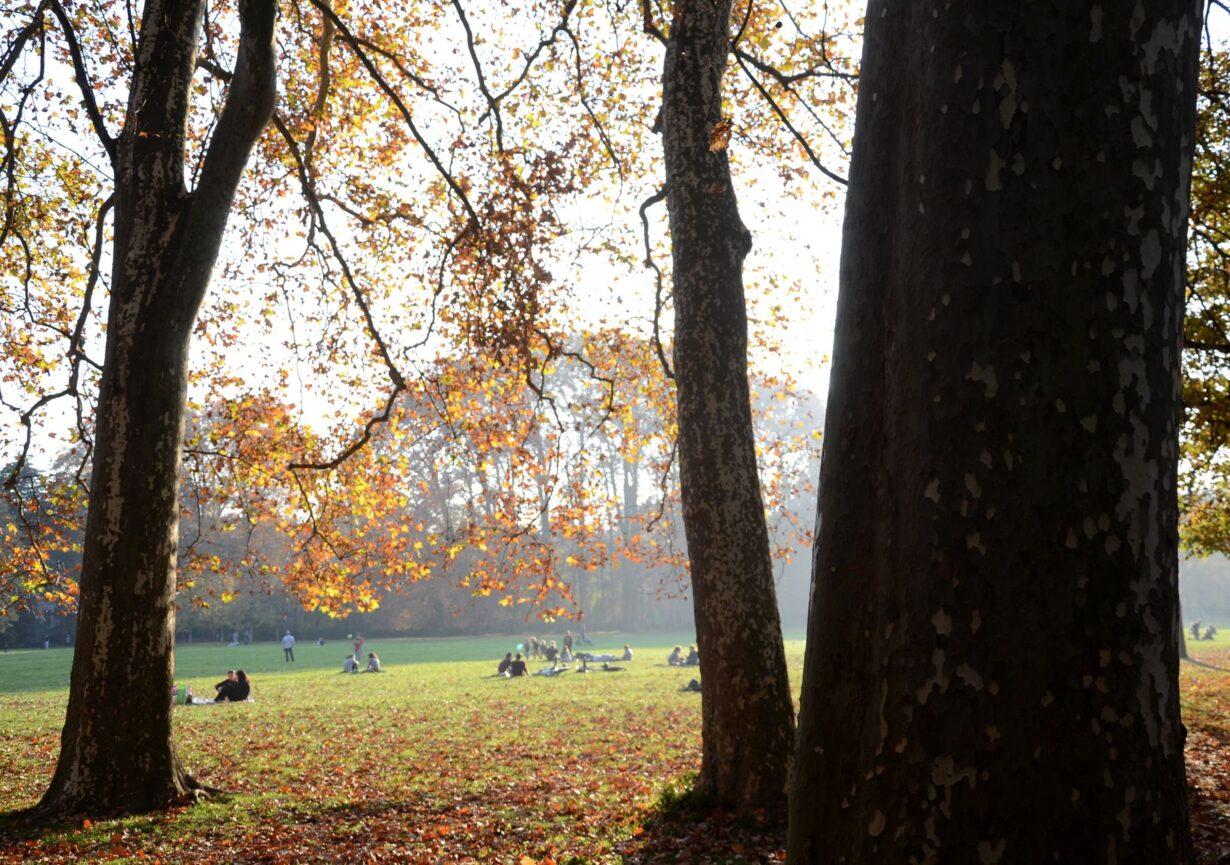 Le parc de la Tête d'Or, l'un des plus grands de France