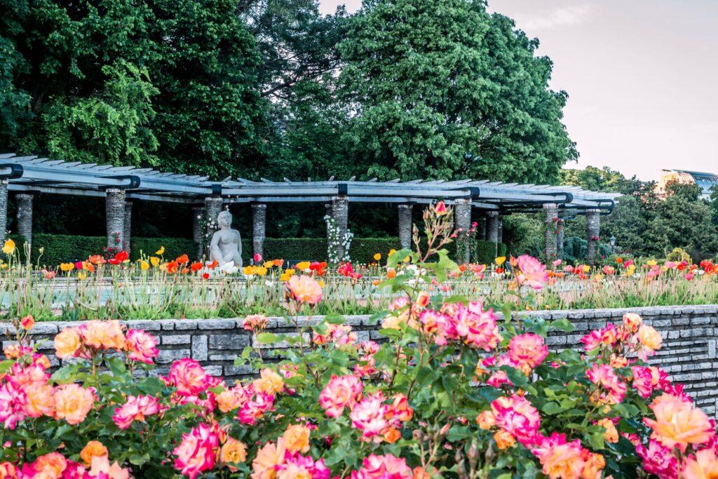 Le parc de la Tête d'Or à la particularité de proposer à ses visiteurs de découvrir trois roseraies
